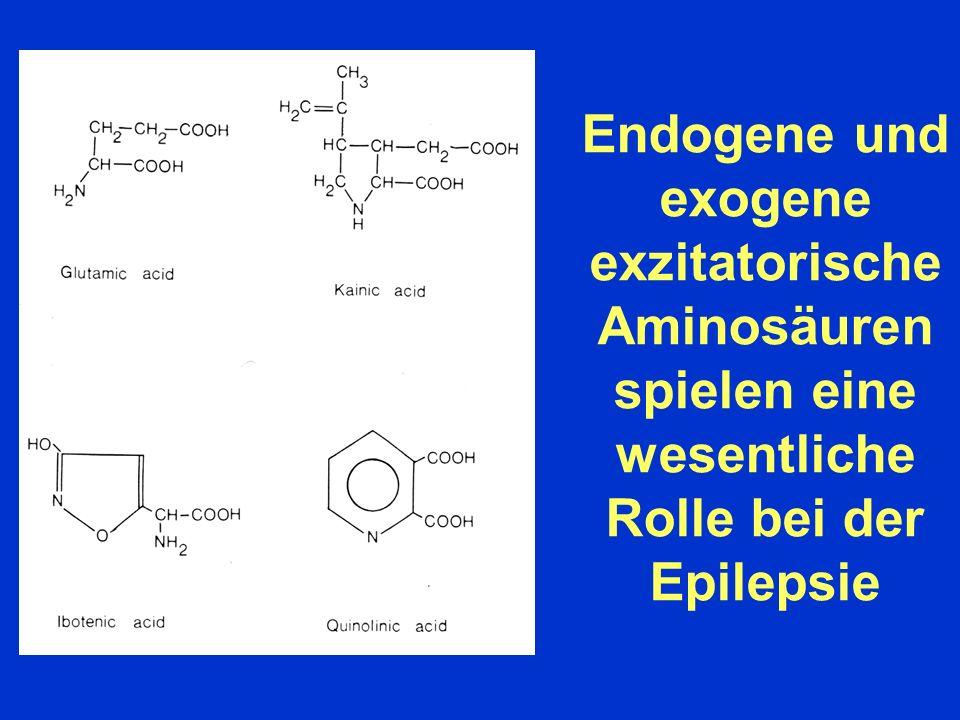 Endogene und exogene exzitatorische Aminosäuren spielen eine wesentliche Rolle bei der Epilepsie