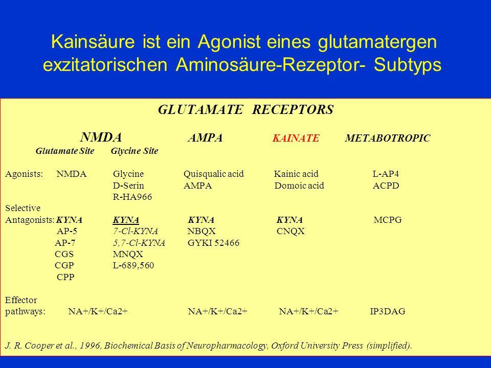 Kainsäure ist ein Agonist eines glutamatergen exzitatorischen Aminosäure-Rezeptor- Subtyps