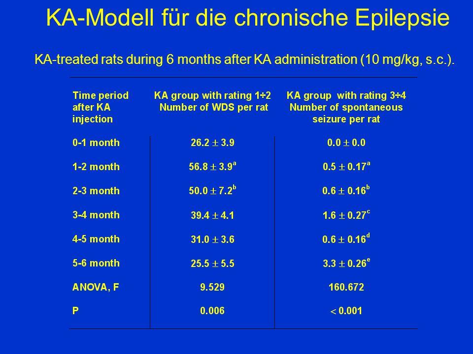KA-Modell für die chronische Epilepsie