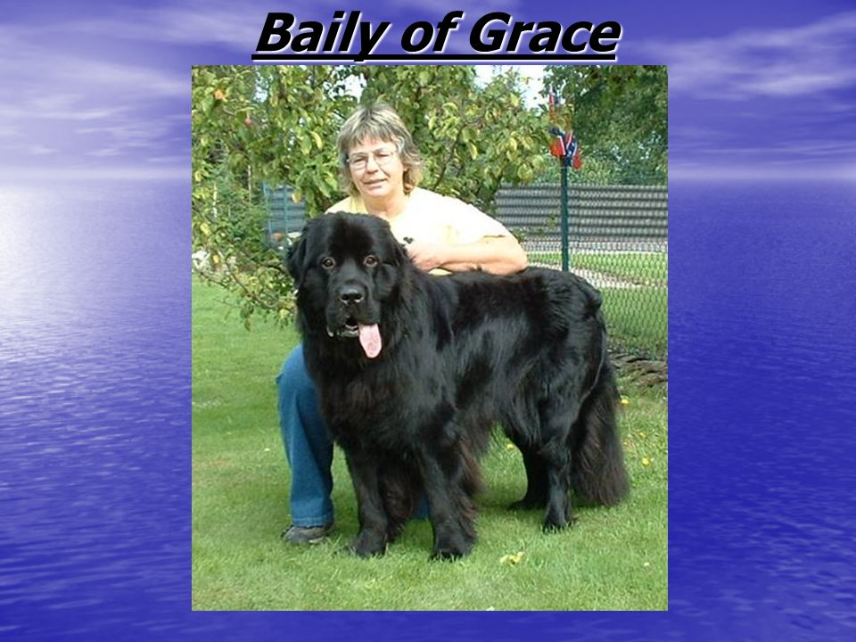 Baily of Grace