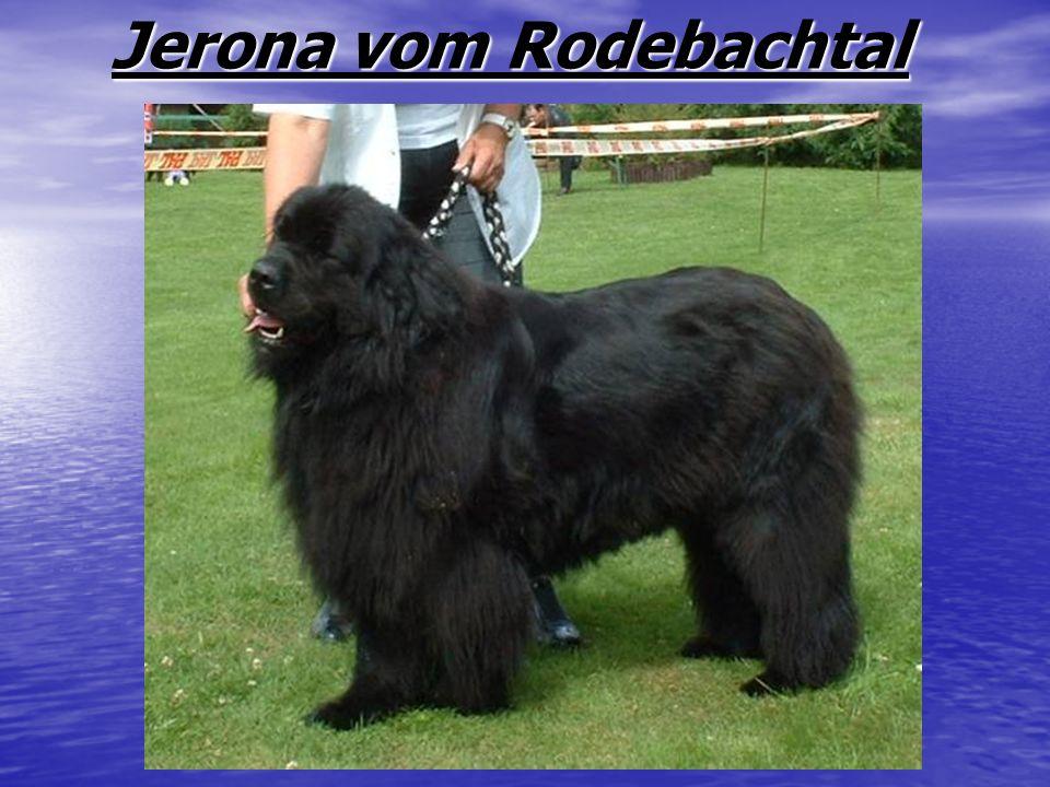 Jerona vom Rodebachtal