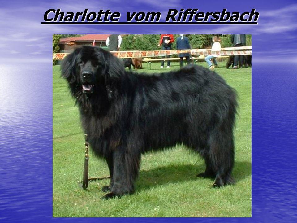 Charlotte vom Riffersbach