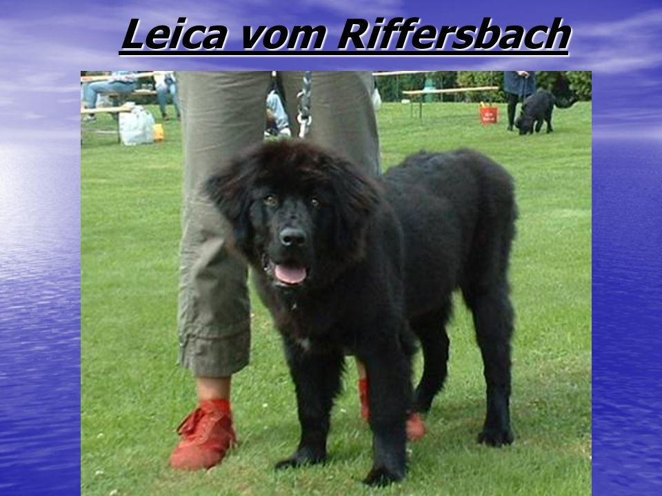 Leica vom Riffersbach