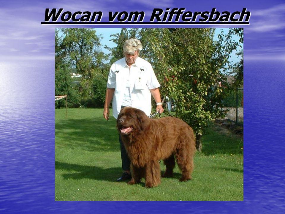 Wocan vom Riffersbach Weltsieger Wocan vom Riffersbach 2004