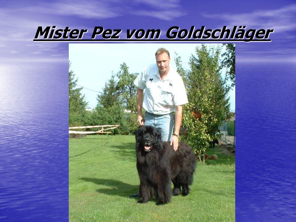 Mister Pez vom Goldschläger