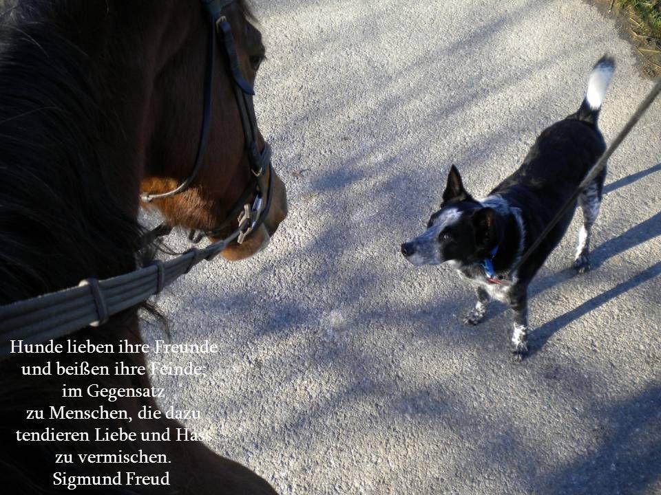 Hunde lieben ihre Freunde und beißen ihre Feinde; im Gegensatz