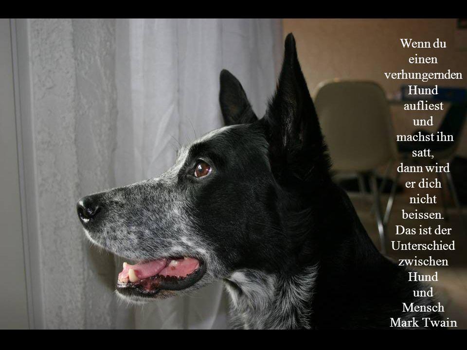 Unterschied zwischen Hund
