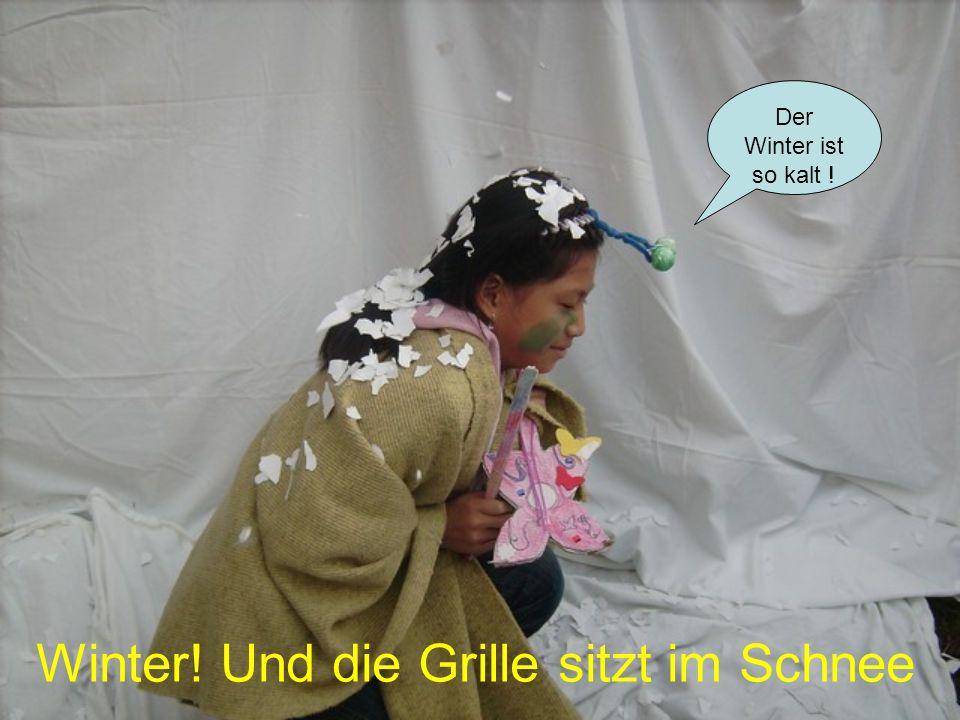 Winter! Und die Grille sitzt im Schnee