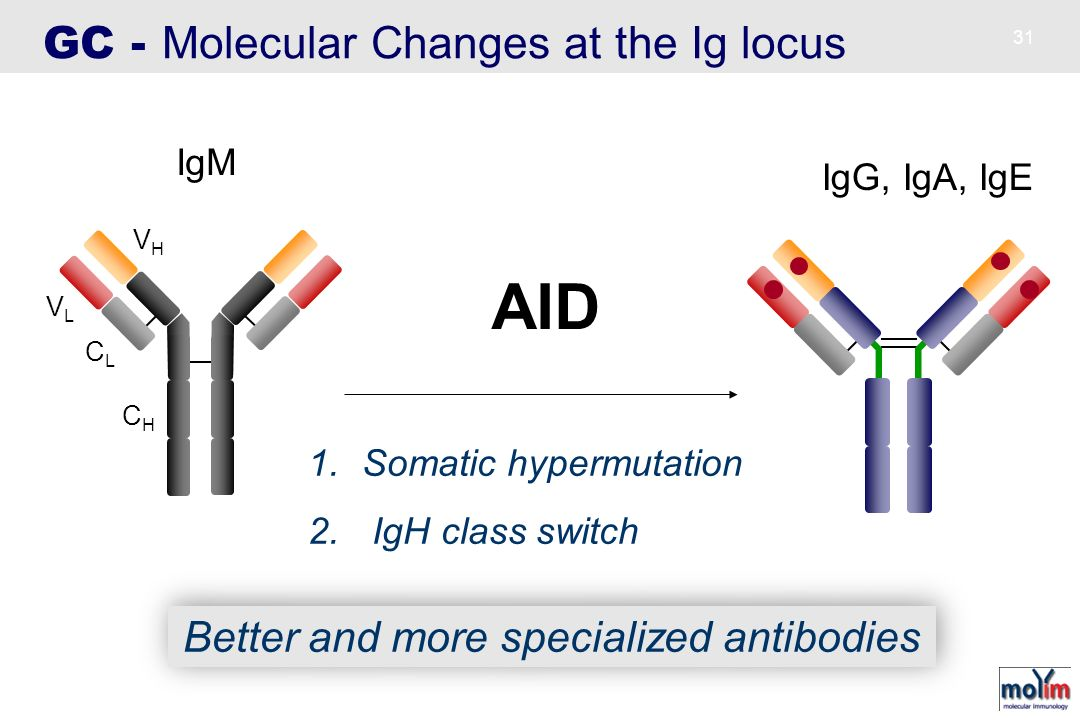 Better and more specialized antibodies