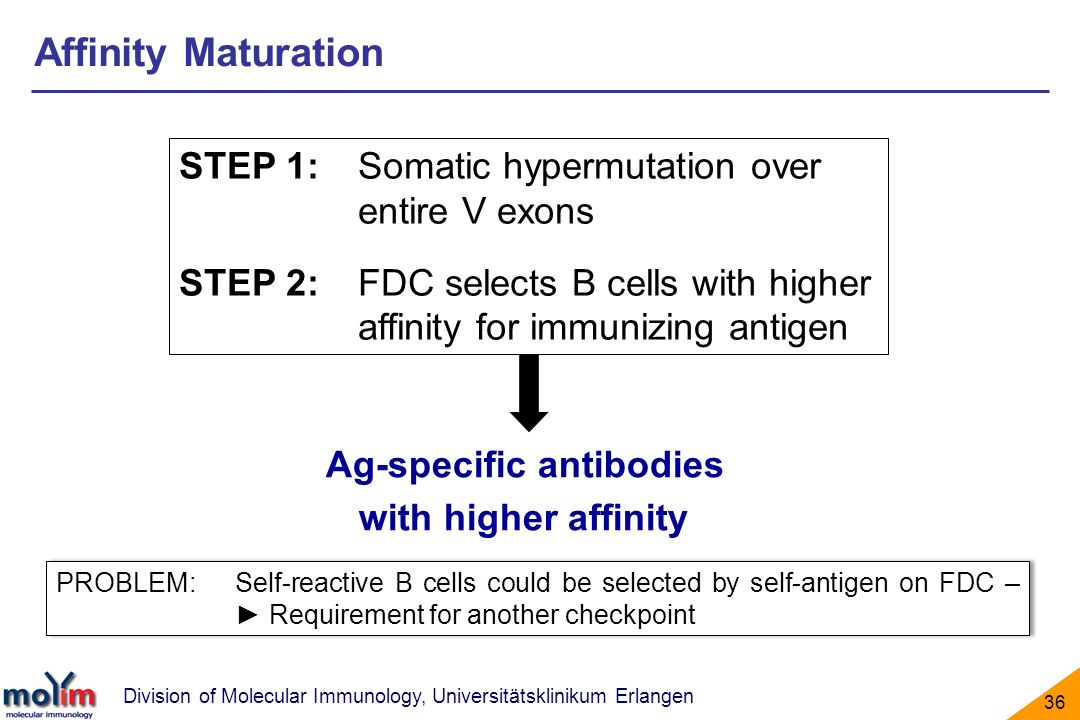 Ag-specific antibodies