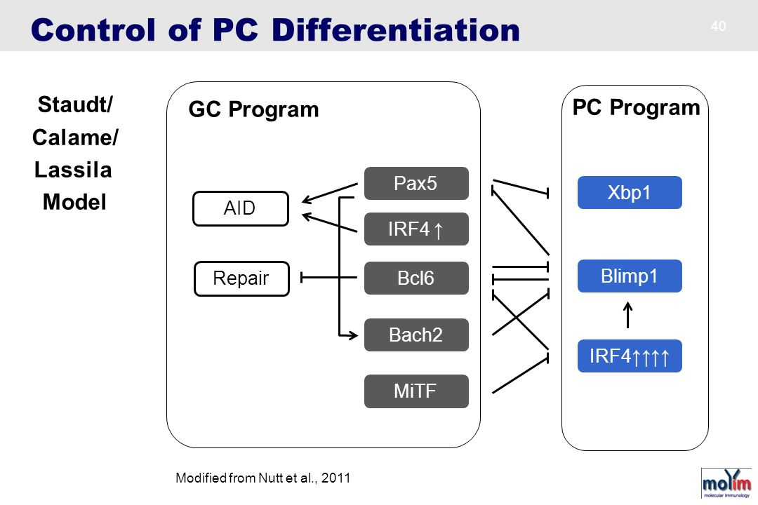 Control of PC Differentiation