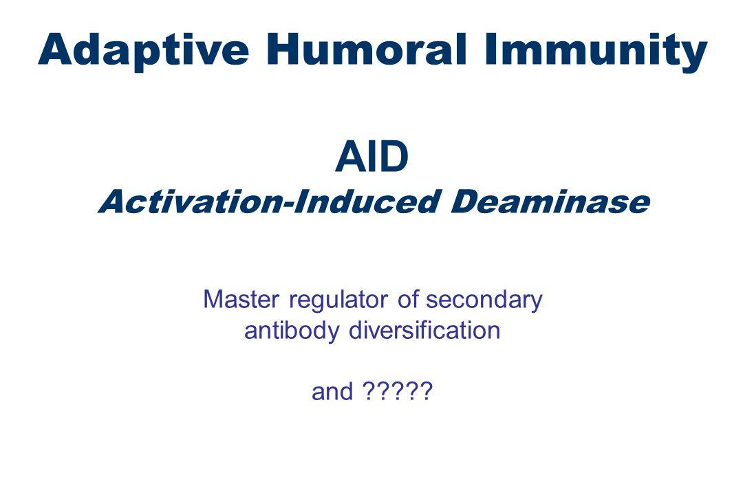 Adaptive Humoral Immunity AID