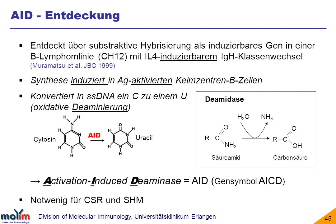 AID - Entdeckung → Activation-Induced Deaminase = AID (Gensymbol AICD)