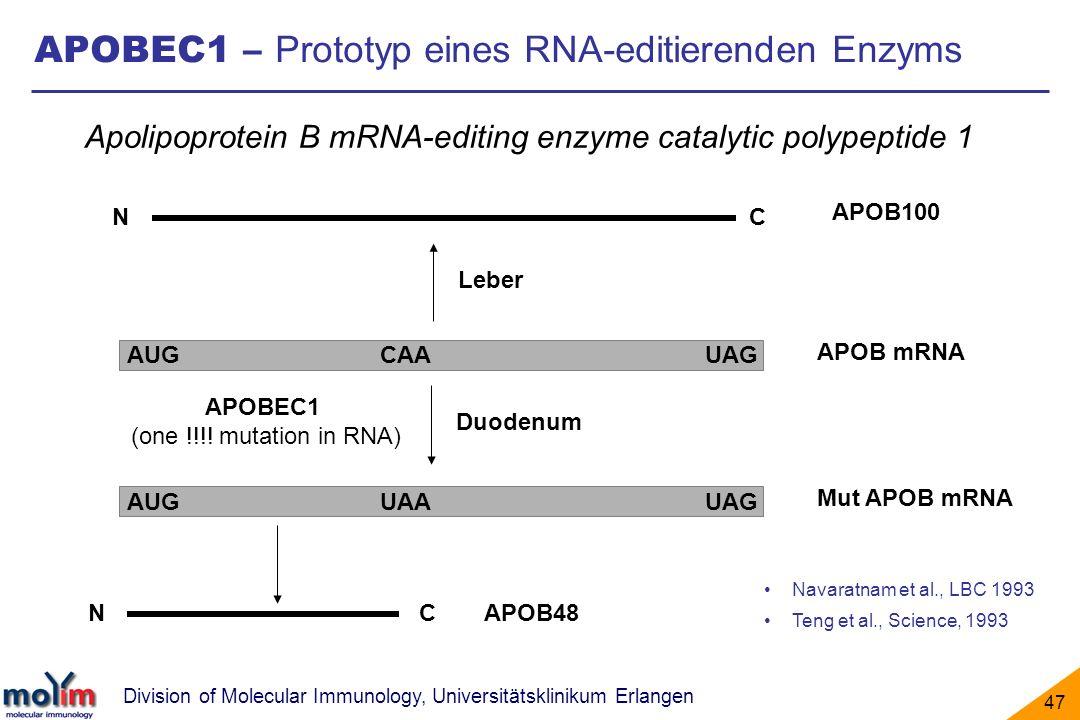 APOBEC1 – Prototyp eines RNA-editierenden Enzyms