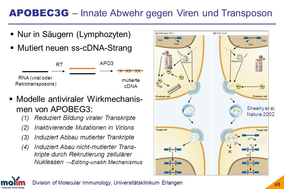 APOBEC3G – Innate Abwehr gegen Viren und Transposon