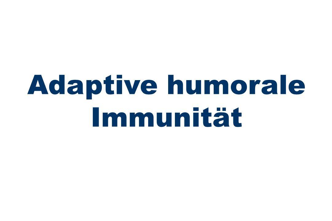 Adaptive humorale Immunität