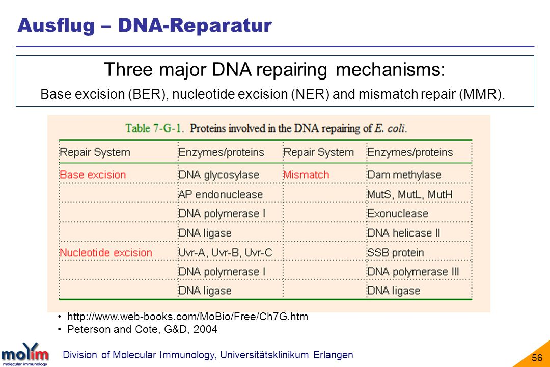 Three major DNA repairing mechanisms: