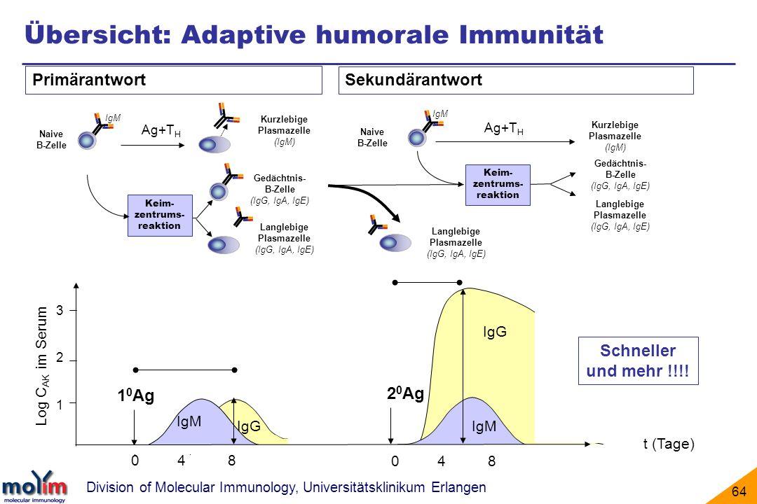 Übersicht: Adaptive humorale Immunität