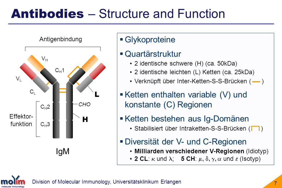 Antibodies – Structure and Function