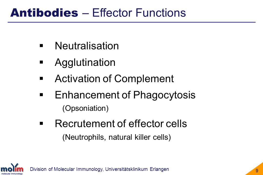 Antibodies – Effector Functions