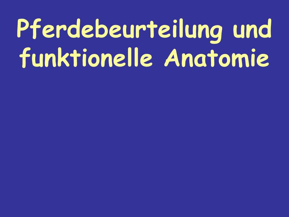 Pferdebeurteilung und funktionelle Anatomie