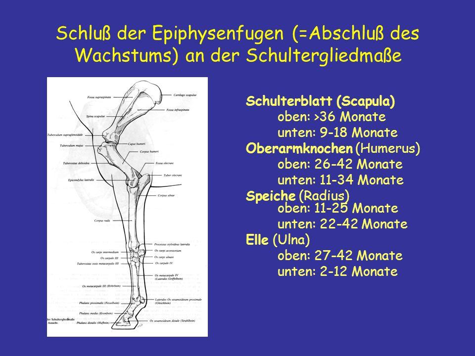 Schluß der Epiphysenfugen (=Abschluß des Wachstums) an der Schultergliedmaße