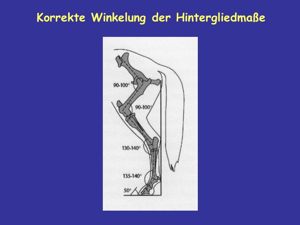 Korrekte Winkelung der Hintergliedmaße