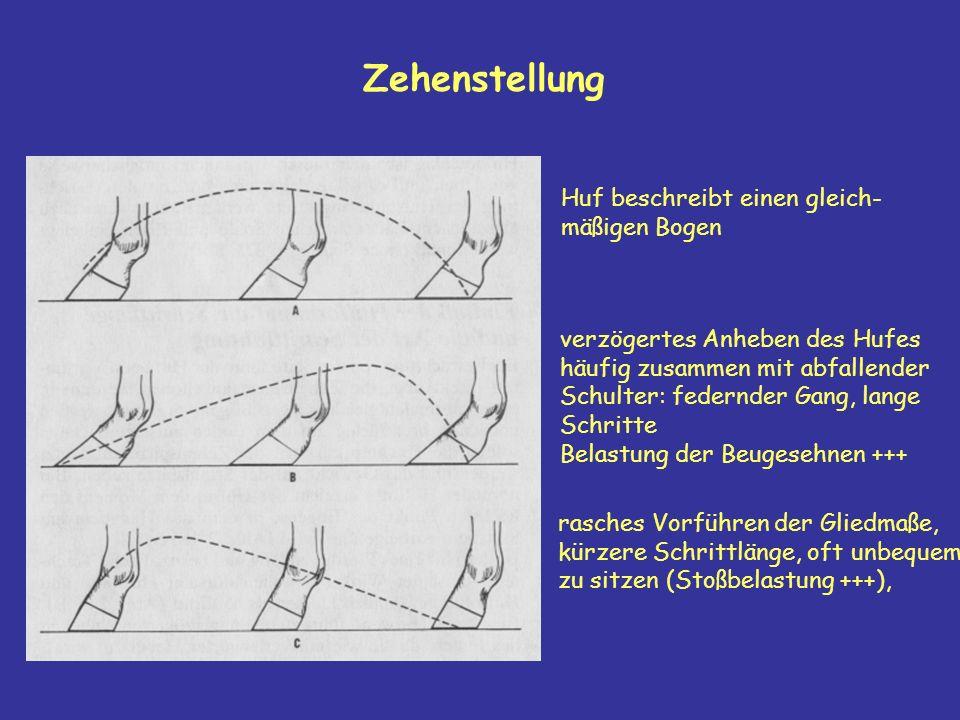 Zehenstellung Huf beschreibt einen gleich- mäßigen Bogen