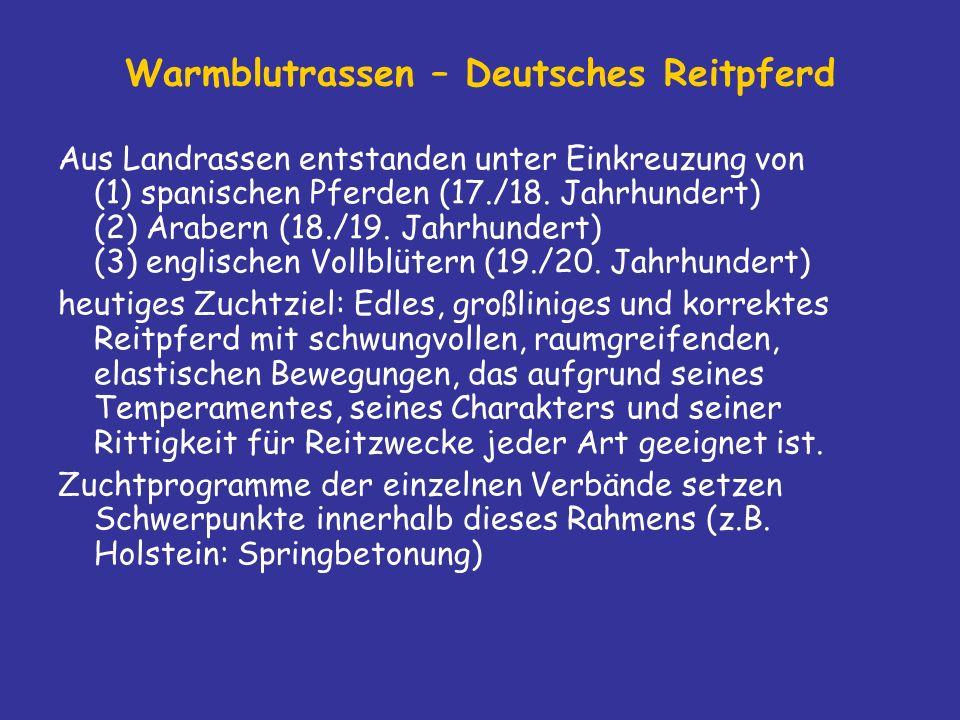Warmblutrassen – Deutsches Reitpferd
