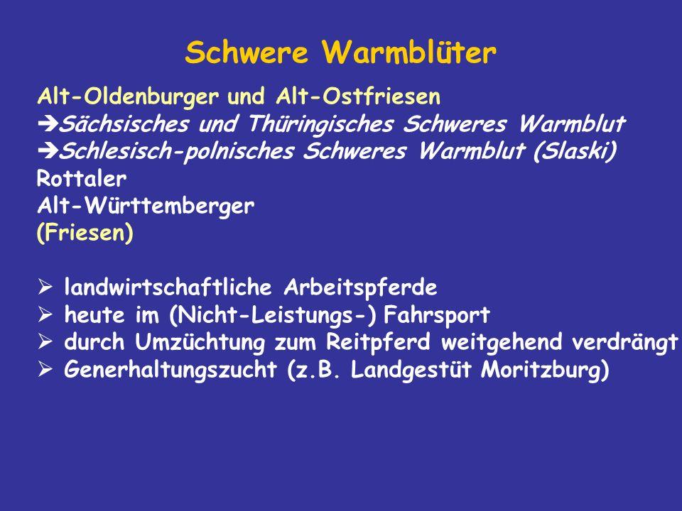 Schwere Warmblüter Alt-Oldenburger und Alt-Ostfriesen