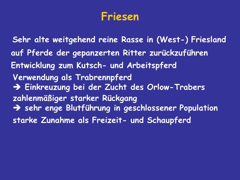 Friesen Sehr alte weitgehend reine Rasse in (West-) Friesland