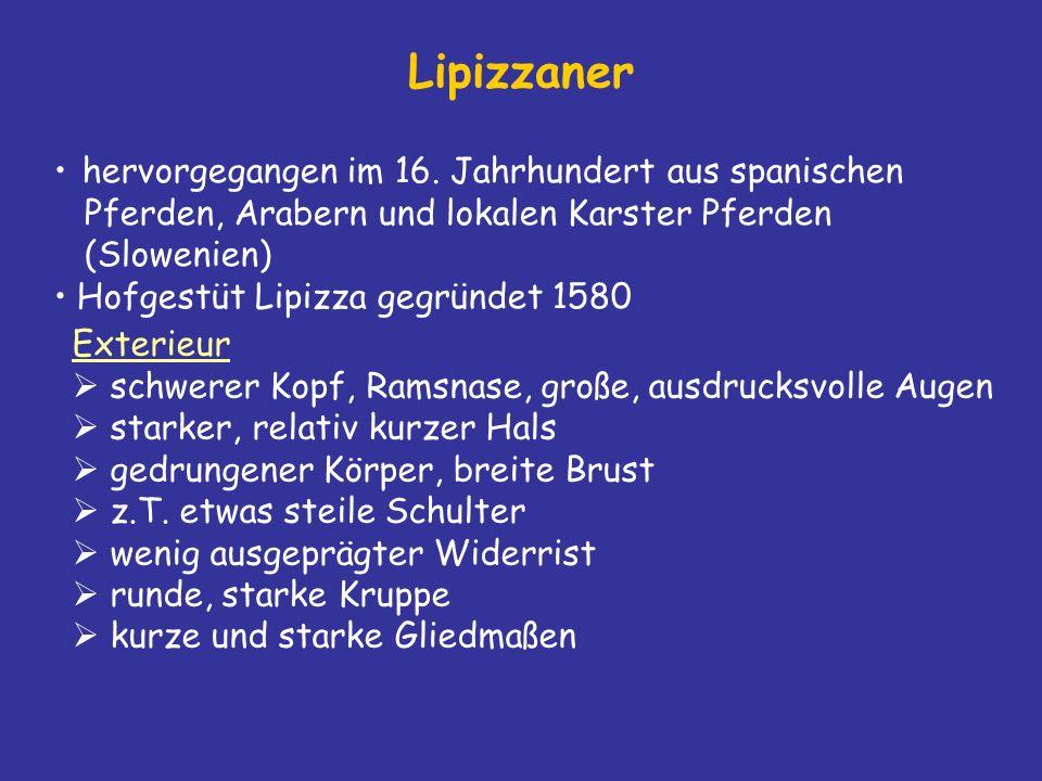 Lipizzaner hervorgegangen im 16. Jahrhundert aus spanischen Pferden, Arabern und lokalen Karster Pferden (Slowenien)