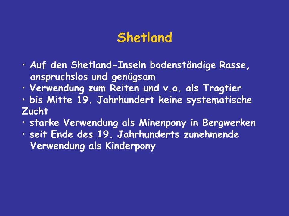 Shetland Auf den Shetland-Inseln bodenständige Rasse, anspruchslos und genügsam. Verwendung zum Reiten und v.a. als Tragtier.