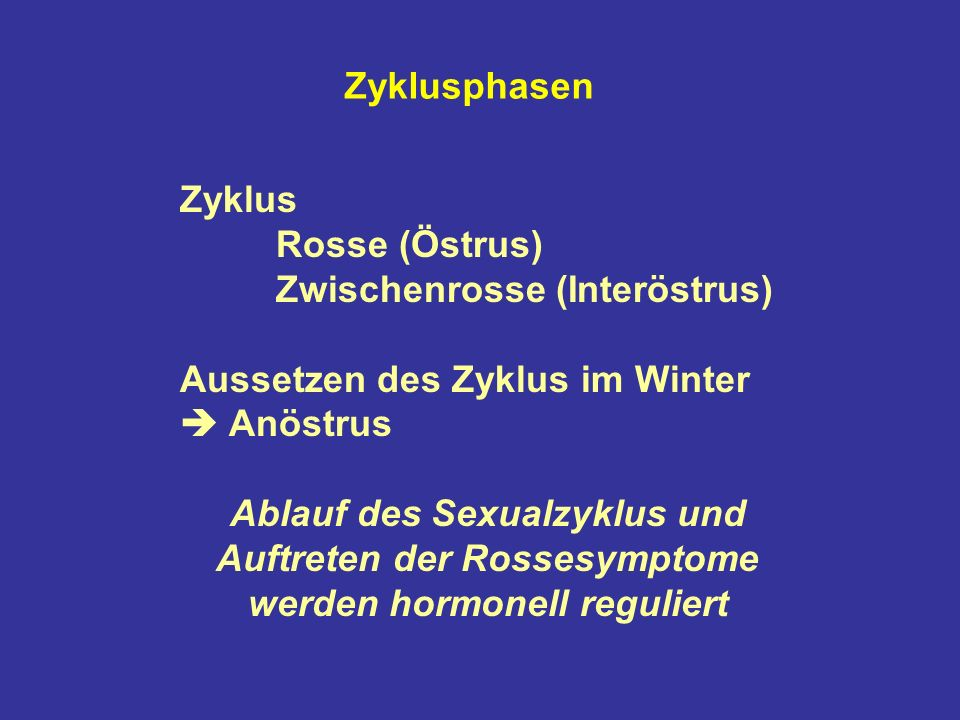 Zyklusphasen Zyklus. Rosse (Östrus) Zwischenrosse (Interöstrus) Aussetzen des Zyklus im Winter  Anöstrus.