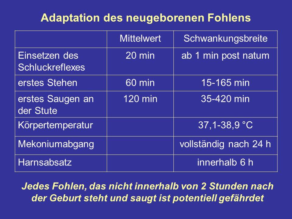 Adaptation des neugeborenen Fohlens