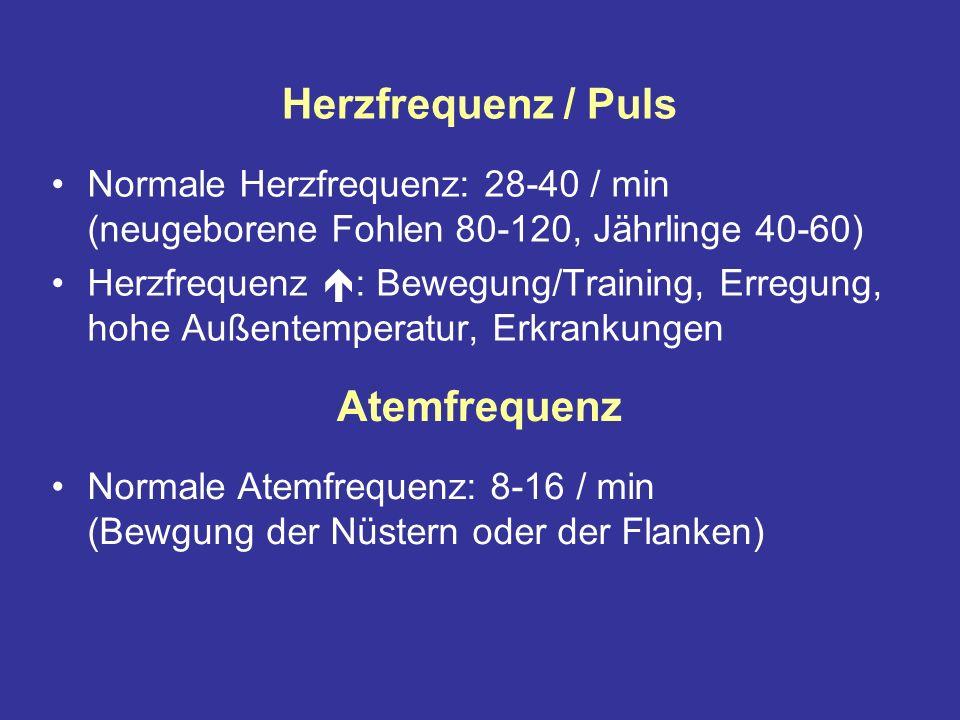 Herzfrequenz / Puls Atemfrequenz