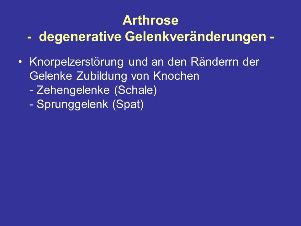 Arthrose - degenerative Gelenkveränderungen -