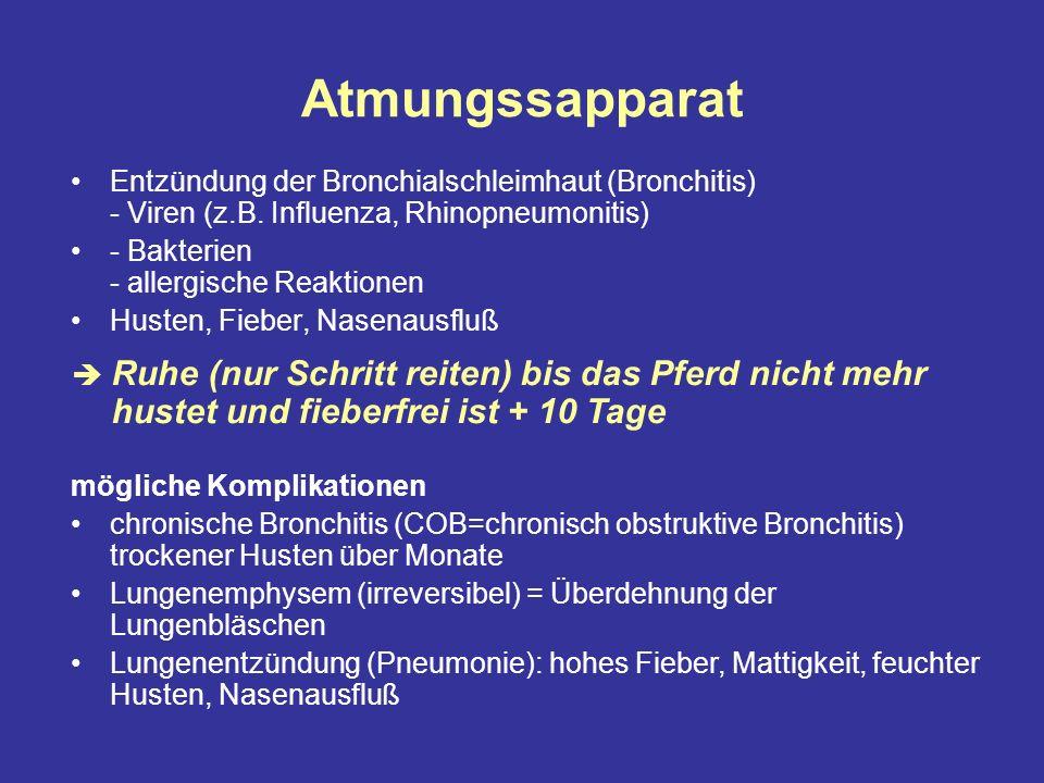 Atmungssapparat Entzündung der Bronchialschleimhaut (Bronchitis) - Viren (z.B. Influenza, Rhinopneumonitis)