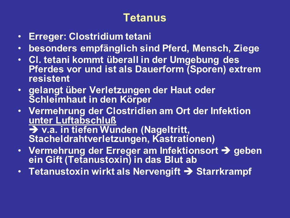 Tetanus Erreger: Clostridium tetani