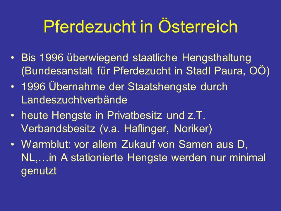 Pferdezucht in Österreich