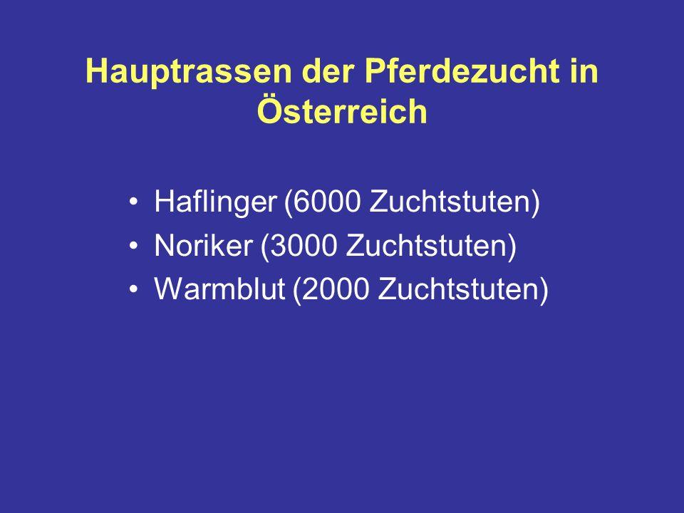 Hauptrassen der Pferdezucht in Österreich