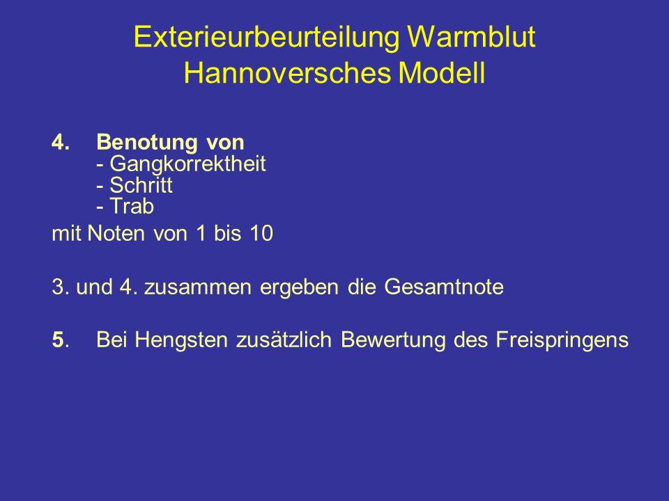 Exterieurbeurteilung Warmblut Hannoversches Modell