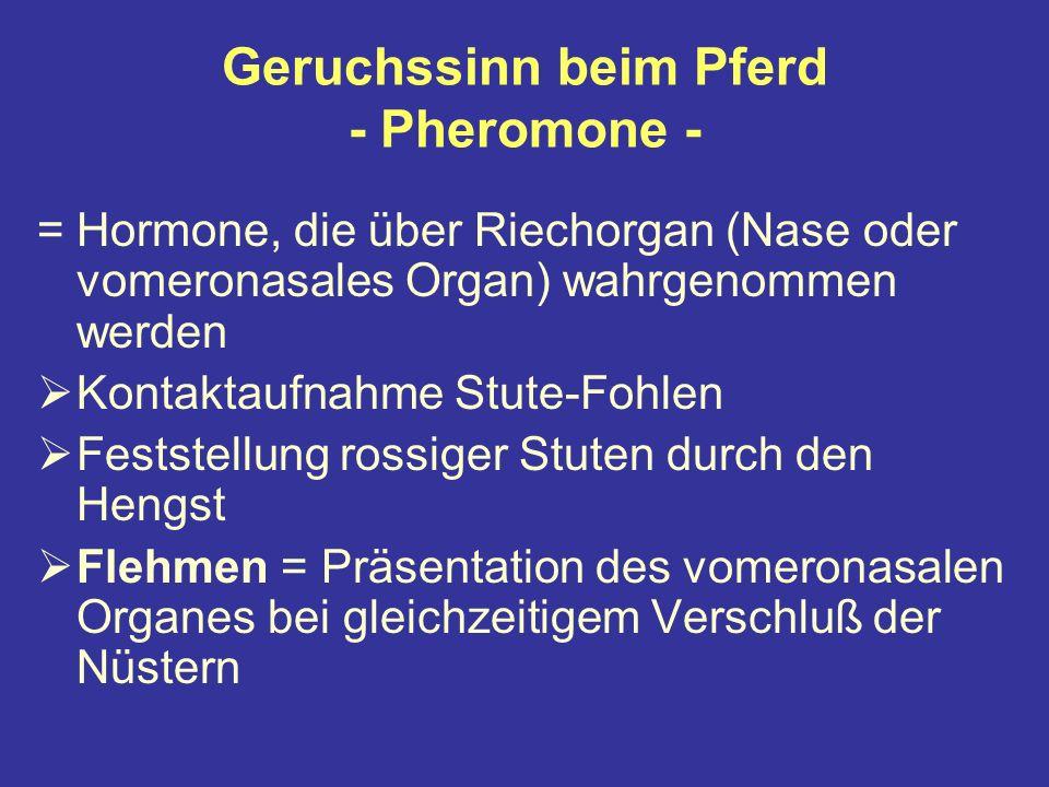 Geruchssinn beim Pferd - Pheromone -
