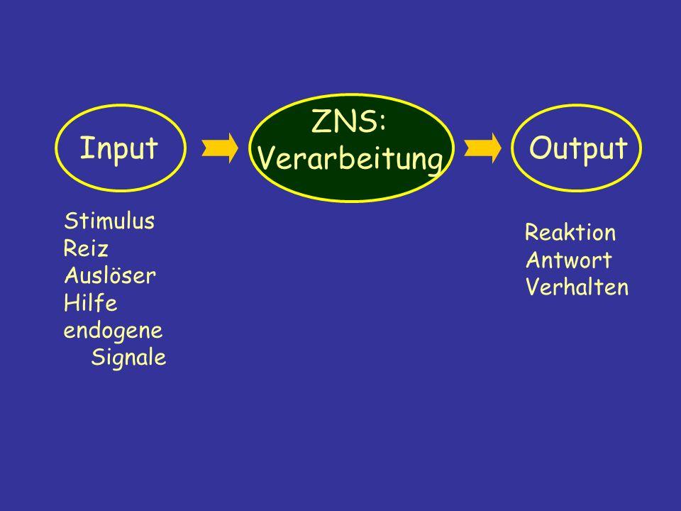 ZNS: Verarbeitung Input Output Stimulus Reiz Reaktion Auslöser Antwort