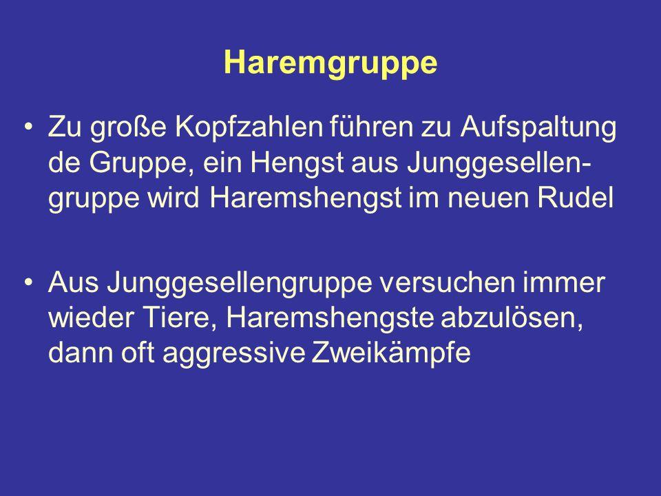 Haremgruppe Zu große Kopfzahlen führen zu Aufspaltung de Gruppe, ein Hengst aus Junggesellen-gruppe wird Haremshengst im neuen Rudel.