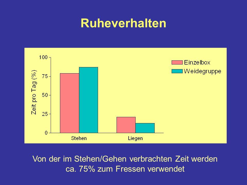 Ruheverhalten Von der im Stehen/Gehen verbrachten Zeit werden ca. 75% zum Fressen verwendet