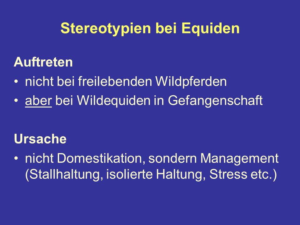 Stereotypien bei Equiden