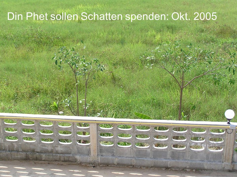 Din Phet sollen Schatten spenden: Okt. 2005