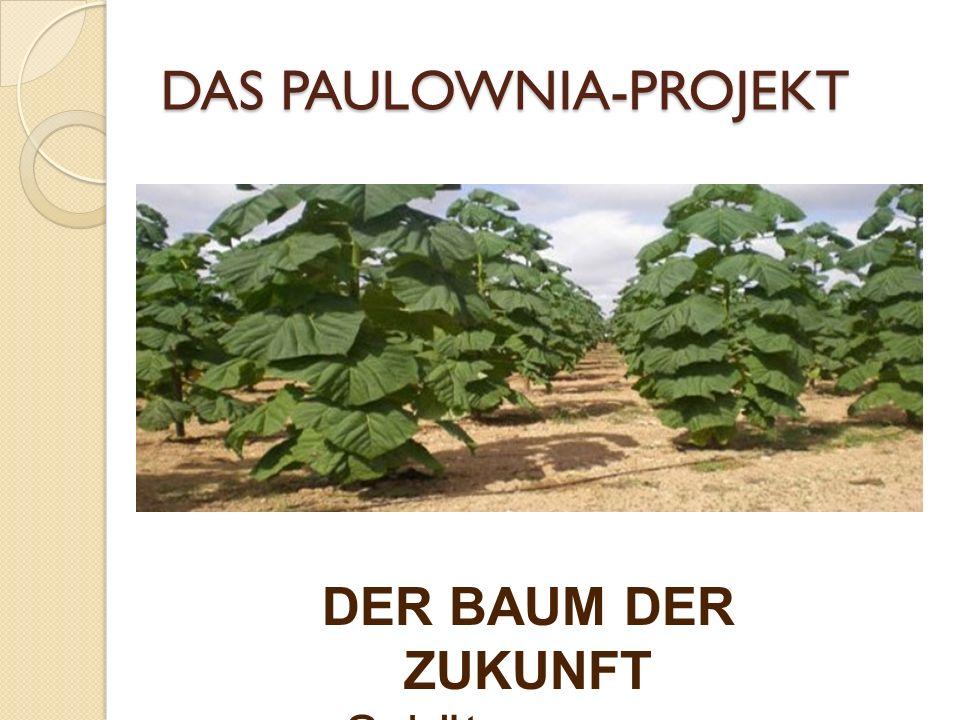 DAS PAULOWNIA-PROJEKT