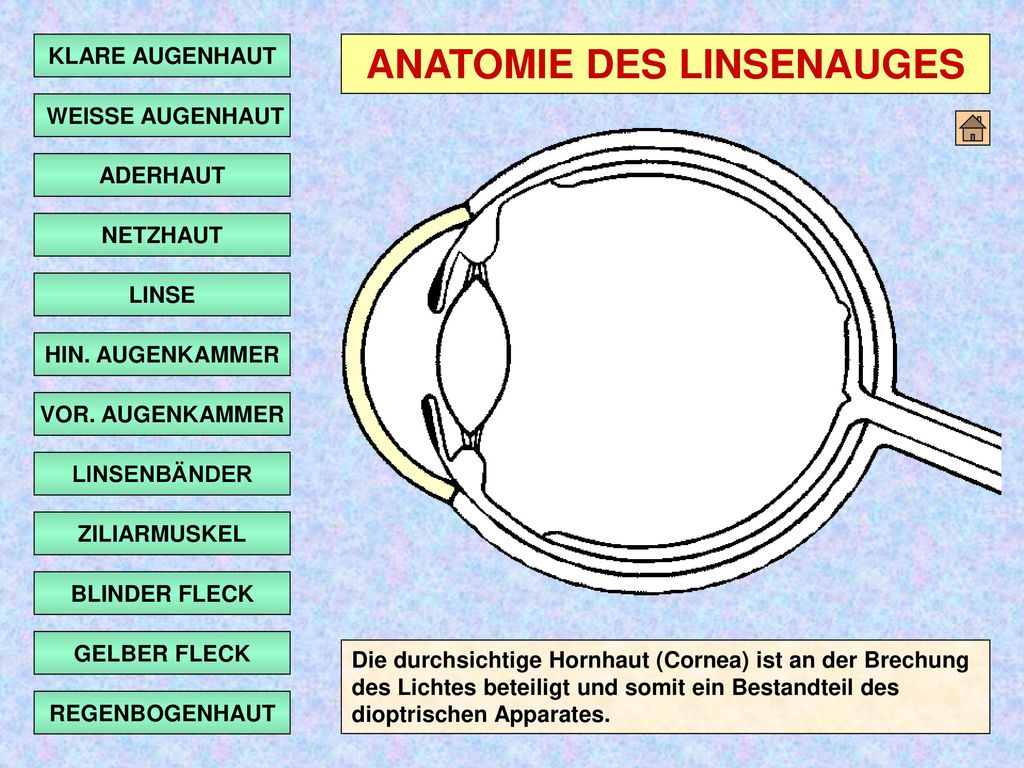 Erfreut Anatomie Des Sehens Ideen - Anatomie Ideen - finotti.info